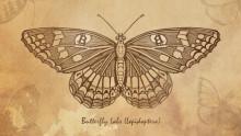 http://cdn.arstechnica.net/wp-content/uploads/2014/04/butterfly-labs.jpg