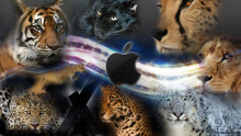 http://9to5mac.files.wordpress.com/2012/11/mac_os_x_cats_background_by_charmanderfan7-d39bjlc.jpg?w=704&h=395&h=396